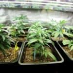 marijuana isn't legal everywhere in california